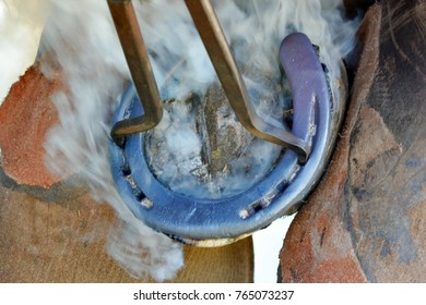Hands of a Caucasian farrier applying a hot horse shoe to the hoof focus on shoe with lots of smoke in the background.