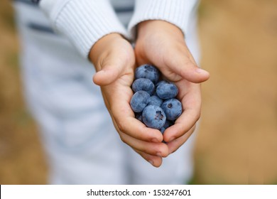 Hands of child with ripe organic blueberries