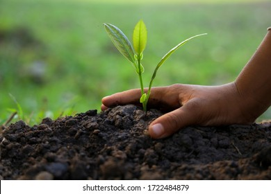 Hands of children are planting small tree seedlings on the ground.