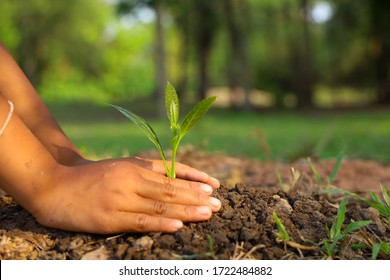 Hands of children are planting trees on the ground.