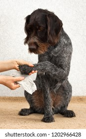 hands cleaning the dog's dirty paw with a rag after walking