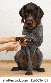 hands cleaning the paw of dog with rag after walking
