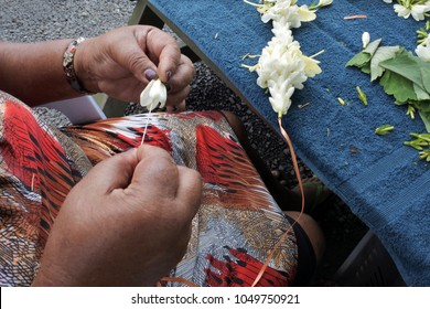 Hands of a Cook Islander mature woman sewing a frangipani flowers lei. A lei can be given to someone for: love, honor, or friendship for another person.