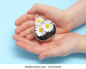 hands with daisies in the eggshell