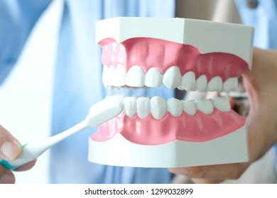 hands of a dentist, he is demonstrating how to brush your teeth properly. To clean the teeth and oral cavity.