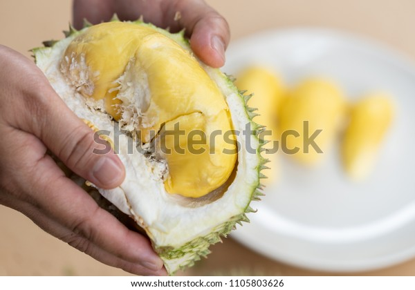The hands are durian peels, durian yellow meat, eat very fresh. Handle durian show the yellow durian meat to eat. Tropical seasonal fruit, king of fruit from Thailand.