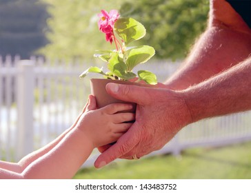 Hands of elderly man and baby holding a flower in the pot against a green natural background in spring. Ecology concept