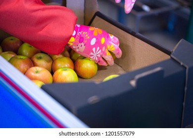 The hands of the employee who packed the apples into a cardboard box on the sorting line. Production facilities of grading, packing and storage of crops of large agricultural firms.