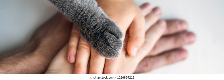 The hands of the family and the furry paw of the cat as a team. Fighting for animal rights, helping animals BANNER, LONG FORMAT