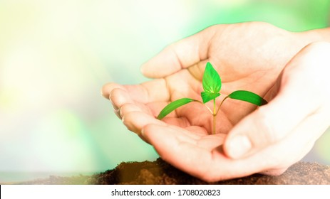 Hands of farmer growing and nurturing plant growing on fertile soil. nurturing baby plant. protect nature. Earth day concept.