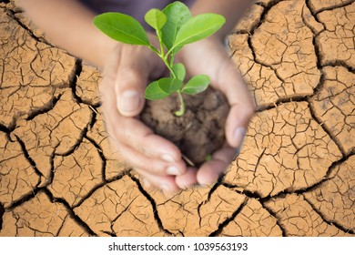 Hands of farmer growing and nurturing tree growing on Drought,global warming