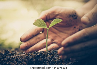 Hands of farmer growing and nurturing tree growing on fertile soil with green and yellow bokeh background /nurturing baby plant / protect nature / Earth day concept