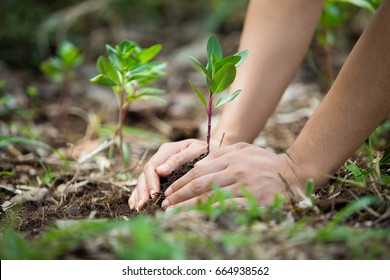 Hands of farmer growing and nurturing tree growing