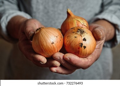 hands of a farmer holding an onion