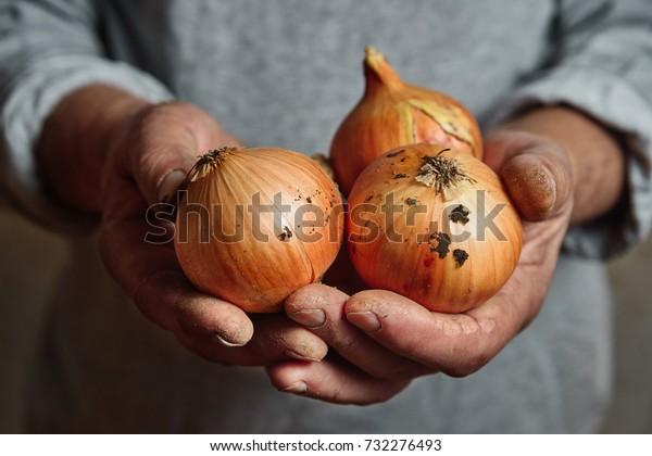 hands of a farmer holding an onion