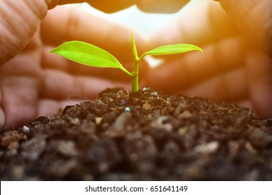 Hands of farmer protect growing plants on fertile soil at sunset background. Save Earth Planet World Concept. World environment day.