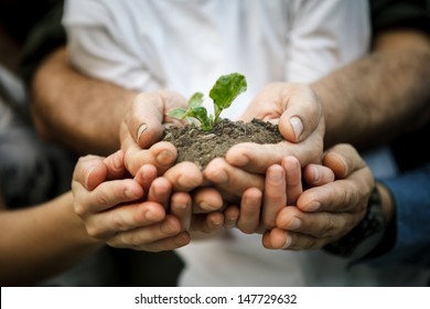 Hands of farmers family holding a young plant in hands