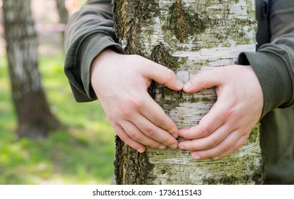 Hands forming a heart shape around a big tree. Man hugging a big tree, love or protecting nature concept