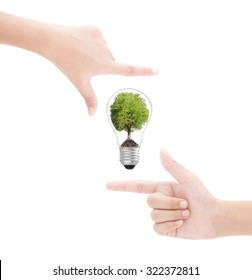Hands framing   tree in  lightbulb on white background