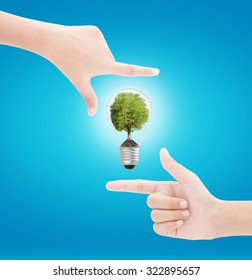 Hands framing   tree in  lightbulb on blue background