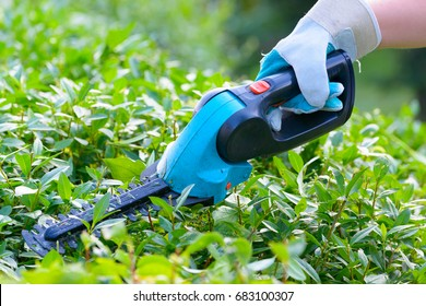Hands with garden battery shears cutting a hedge