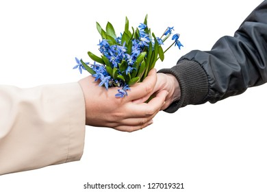 Hands girls and men with a bouquet of snowdrops isolated on white background