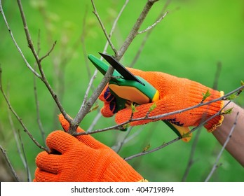 Hands with gloves of gardener doing maintenance work, pruning the tree