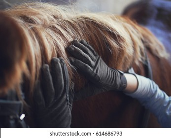 Hands in gloves on the mane of a horse.