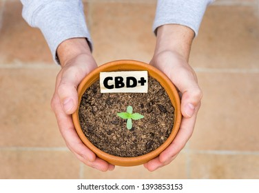 Hands grasping / holding a plant of medicinal CBD, iconon of the legalization of marijuana that respects the environment, ecological natural healthy. Advertising image, vegan and ecofriendly lifestyle