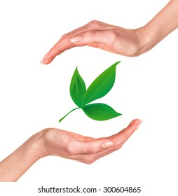Hands with green leaf over white background