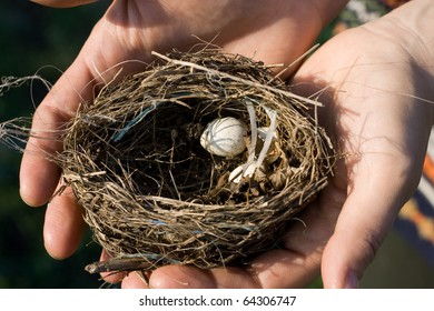 Hands hold a Bird nest with two eggs.