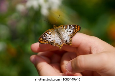 Hands holding a butterfly