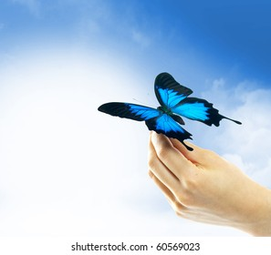 Hands holding a butterfly against a blue sky
