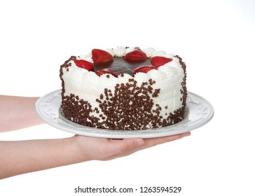 Hands holding Chocolate cake frosting in vanilla cream with chocolate glaze topping surrounded by fresh cut strawberries dipped in glaze Chocolate chip morsels pressed into the side Isolated.