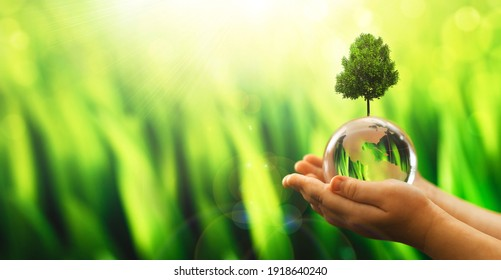 Hands holding crystal earth globe and growing tree. Arbor Day. Environment, save clean planet, ecology concept. Earth Day banner with  copy space