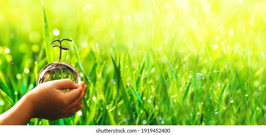 Hands holding crystal earth globe and growing plant. Environment, save clean planet, ecology concept. Earth Day banner with  copy space