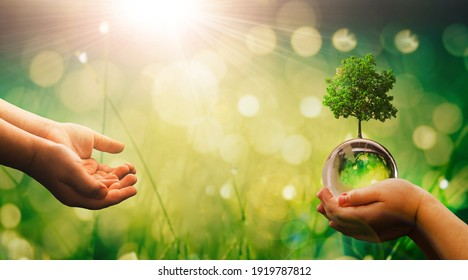Hands holding crystal earth globe and growing tree.  Earth Day banner with  copy space. Environment, save clean planet, ecology concept.