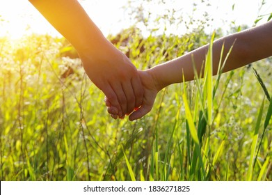 Hands of holding each other in field on sun