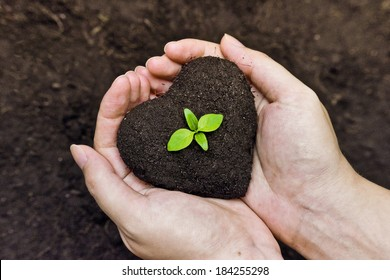 hands holding fertile soil as a heart shape with a young green tree in the middle /  planting tree / growing a tree / love nature / heal the world