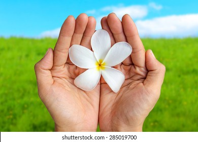 Hands Holding Flower In The Air. Grass and Sky Background