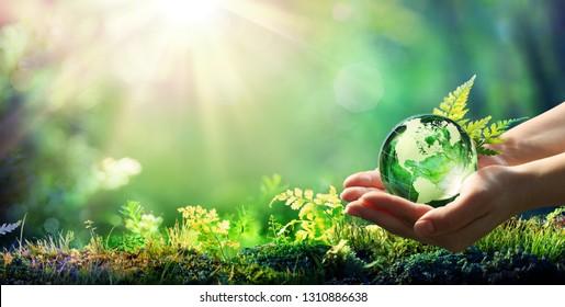 Hands, die Globe-Glas im grünen Wald halten - Umweltkonzept - US-amerikanische Elemente dieses von der NASA bereitgestellten Bildes