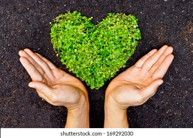 hands holding green heart shaped tree / green baby plants arranged in a heart shape / love nature / save the world / heal the world / environmental preservation