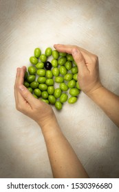 hands holding green olives and a black one,collected from the olives campaign,healthy food