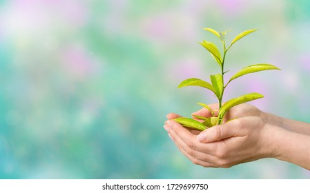 Hands holding a green plant. Eco friendly.   Earth day concept. Word Environment day