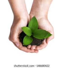 Hands holding a green sprout, isolated on white