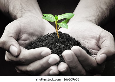 Hands holding green sprout with soil