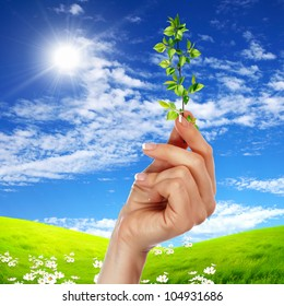 Hands holding green sprouts and sunny sky