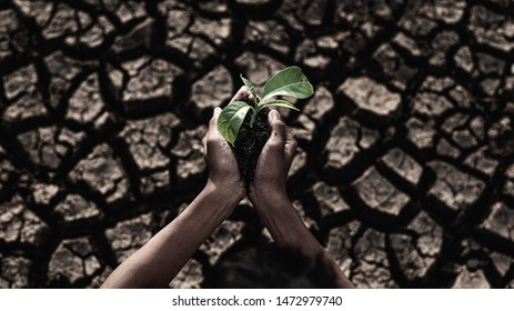 Hands holding green young plant in dry land,Crack dried soil in drough, Severe drought