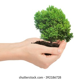 Hands holding ground with tree