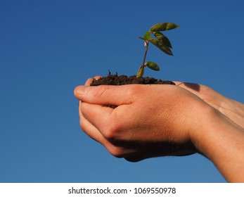 Hands holding a growing plant on a blue sky